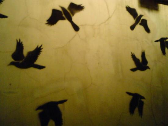 Птицы в Ростове