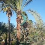 Дед Мороз и пальмы