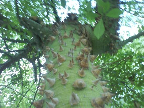 Египет. Хургада. Чудо-дерево. Фотографиня: Галина Пилипенко