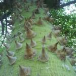 Чудо-дерево. Не в Ростове…