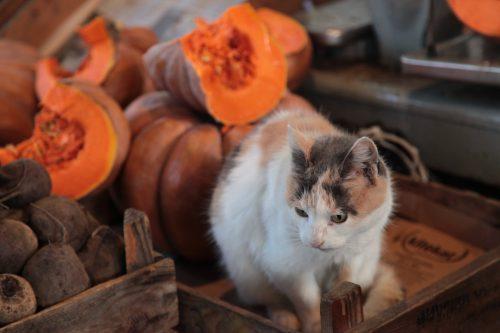 Кошку от дел оторвала фотографии ради Галина Пилипенко
